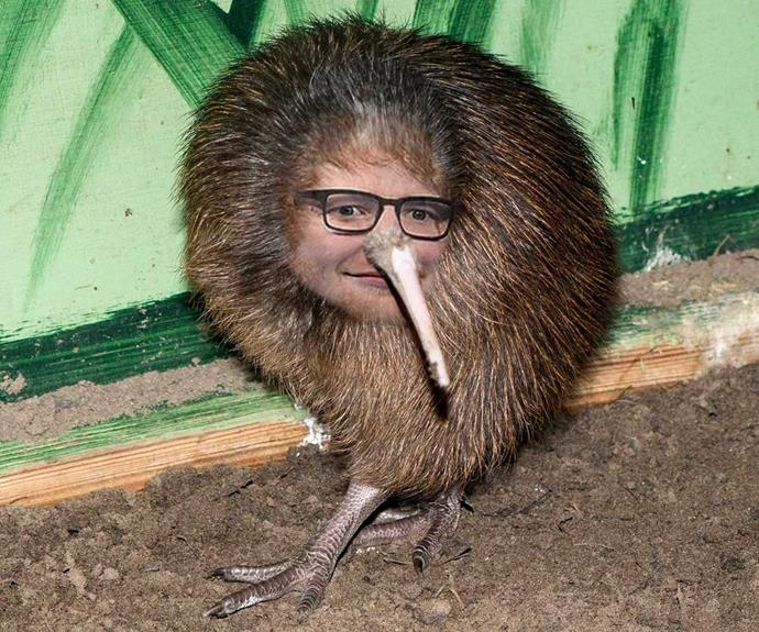 Approximation of what Ed may look like when his dream of becoming a Kiwi comes true.