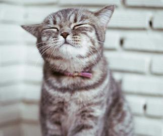 The 5 secrets to a happy cat