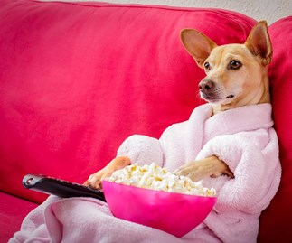 The oddly huge part your pets play in your Netflix viewing habits