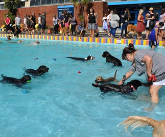 This Auckland dog pool party is just paw-fect