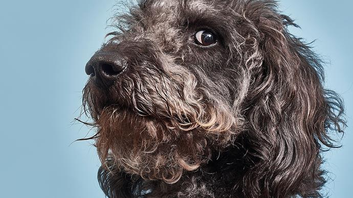 Why your pooch does some of the weird things it does