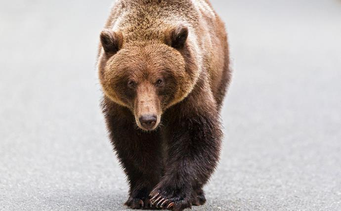 A bear walks into a guy's backyard, drinks a margarita and takes a dip in his jacuzzi - and we're fur real!