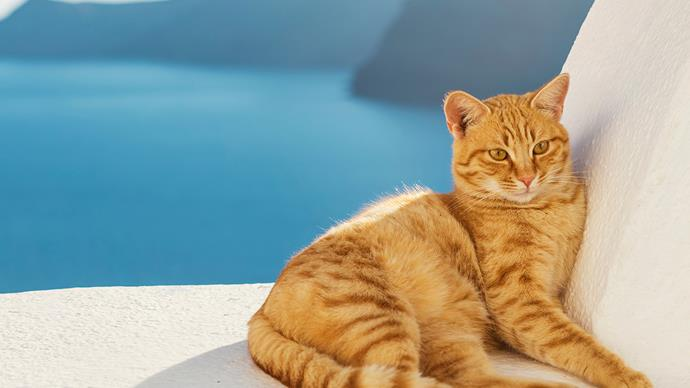 Dust off your CV! A cat sanctuary on an idyllic Greek Island is looking for a caretaker