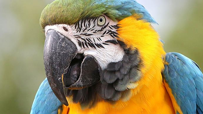A sweary parrot that was stuck on a roof for three days tells her rescuers to eff off!