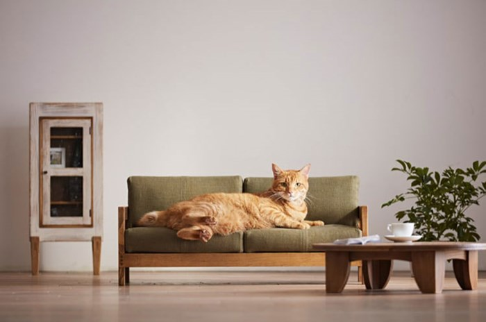 Are pets taking over the world? The extremes pet owners go to for the love of their furry friends