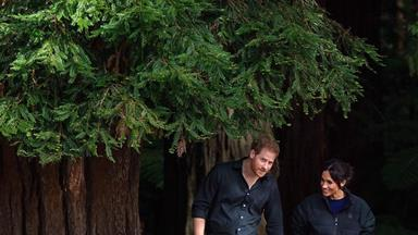 Prince Harry and Duchess Meghan wrap up their royal tour of NZ with a walk amongst the treetops