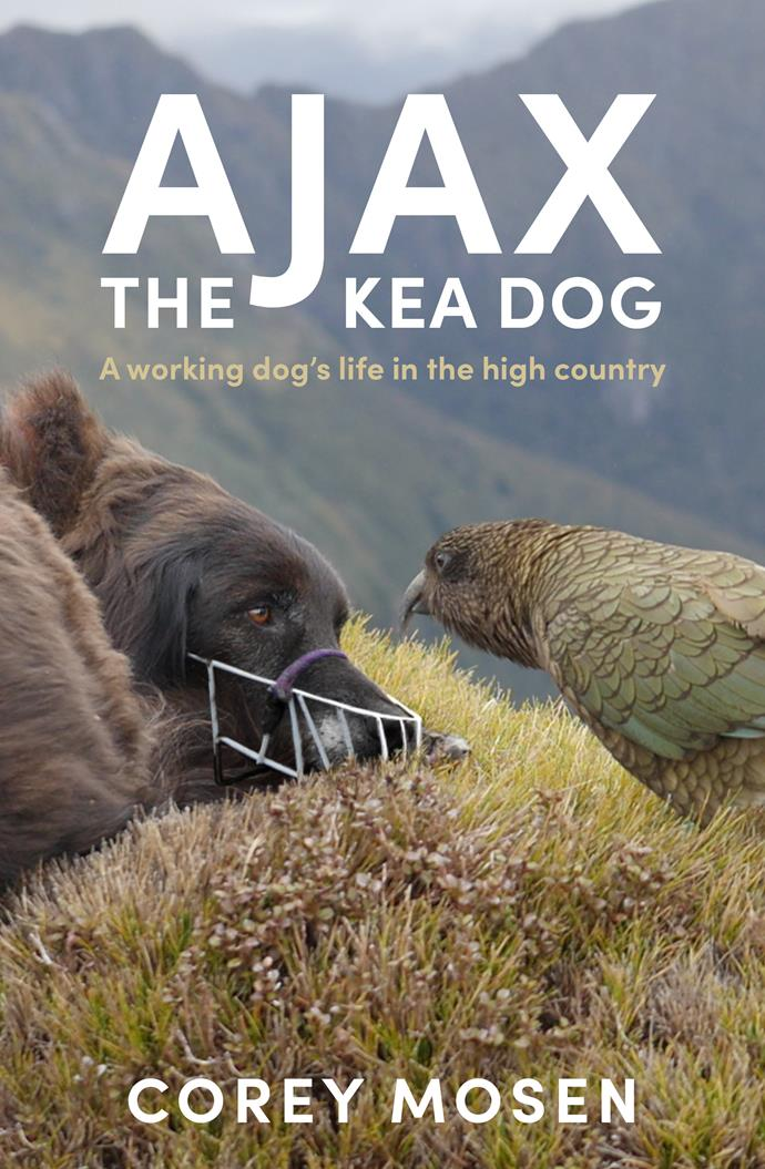 *Ajax The Kea Dog* by Corey Mosen (Allen & Unwin) is out in all good book stores now.