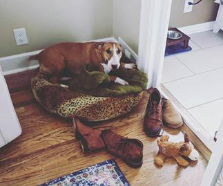 This sweet dog's habit of collecting her owner's shoes will melt your heart