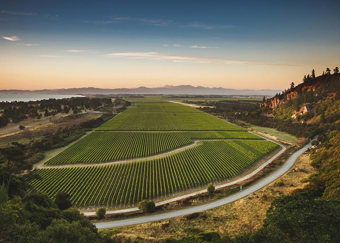 The vines at Wither Hills' Rarangi vineyard is  cooled by the delicate sea breeze.