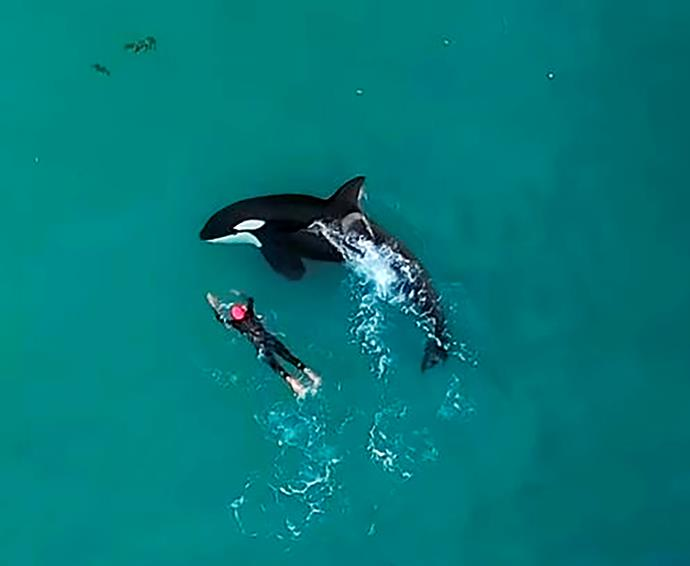 A drone caught the magical moment the orcas joined Judie. *Image: Dylan Brayshaw*