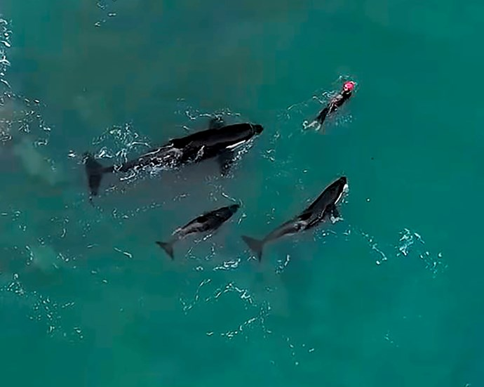 Judie says if she knew   she was going to have a close encounter, she probably wouldn't have swum that day. *Image: Dylan Brayshaw*