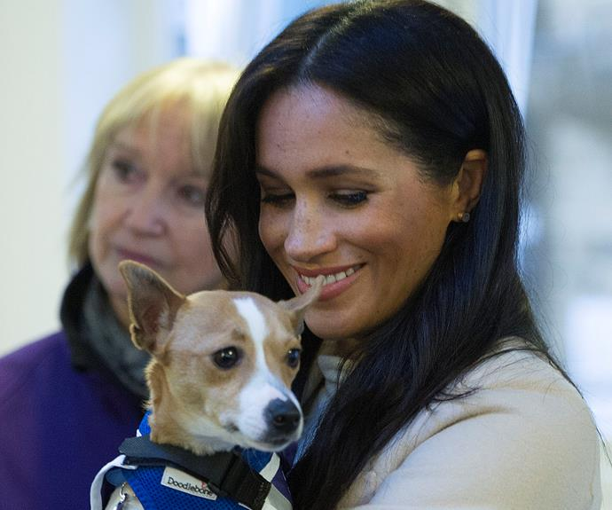 meghan markle and a dog