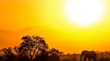 The life lessons I learned on safari in Africa