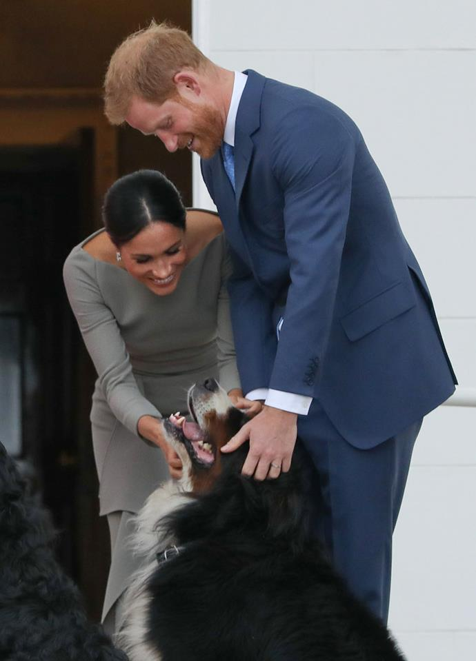 Meghan and Harry are known to be dog-lovers and currently own two dogs. *(Image: Getty)*