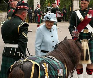 the queen and shetland pony scotland