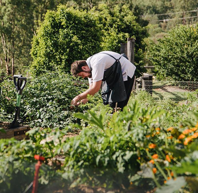 Homage's kitchen garden