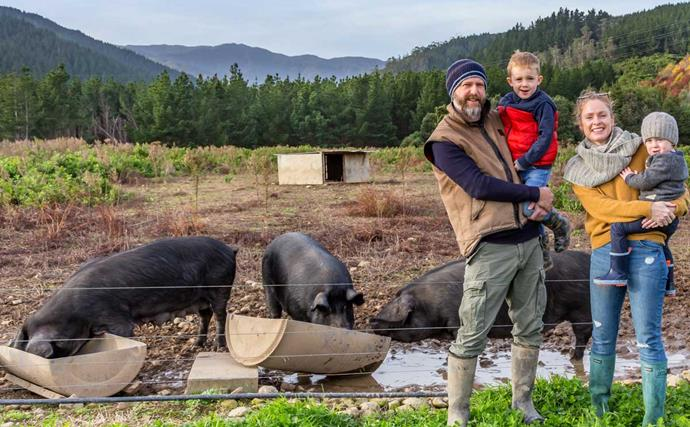 Swapping city life for country life: We moved from Sydney to a pig farm in Manakau