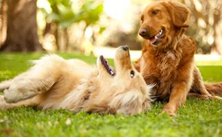 How to make sure your dog is getting the nutrition he or she needs