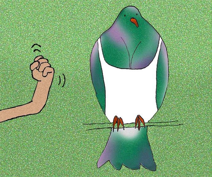 Whether you're Team Kākāpō, Kōkako or Tui, Bird of the Year says a lot about Kiwis