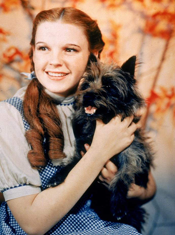 """Renée says Judy Garland was given no room in her schedule to be """"sane""""."""