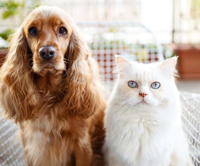 caring for elderly pets