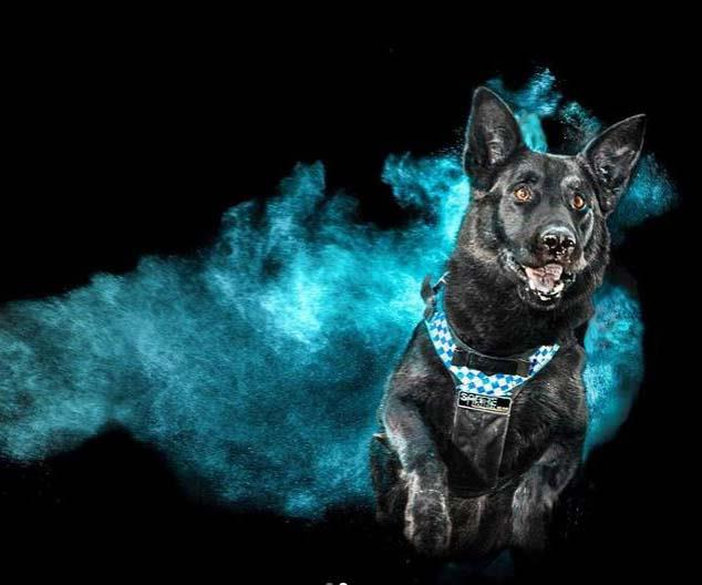 This 'out of the blue' image taken by a police forensic photographer has us all impressed