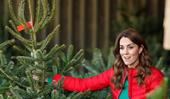 Duchess Catherine shares her family's secret for picking the best Christmas tree