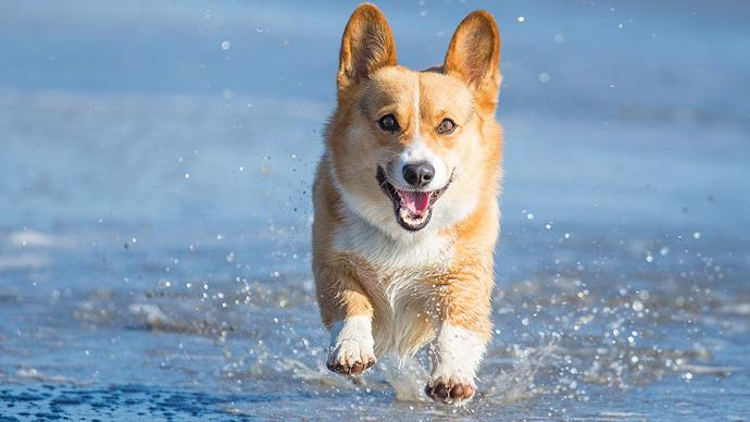 It's getting hot in here: Expert advice on caring for your pet over summer