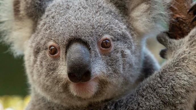 WIRES, the organisation saving wildlife as Australian bush fires rage