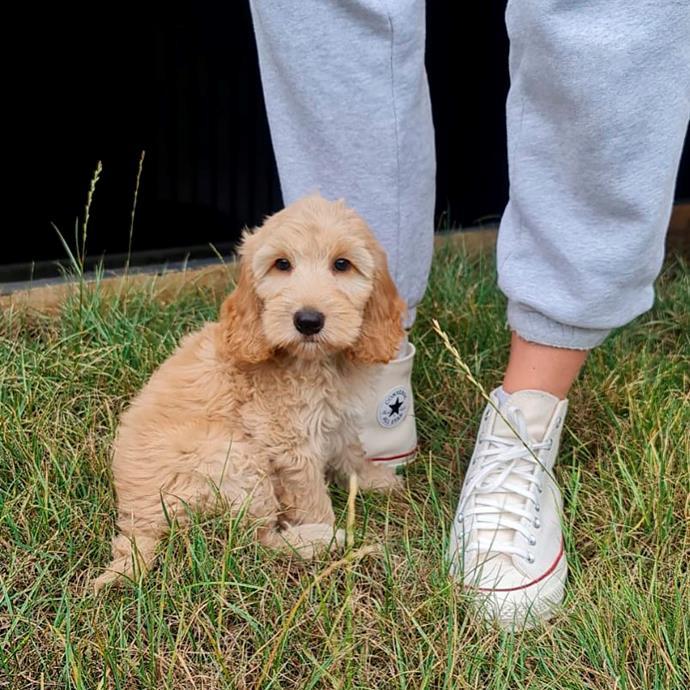 Jess' new puppy Scout