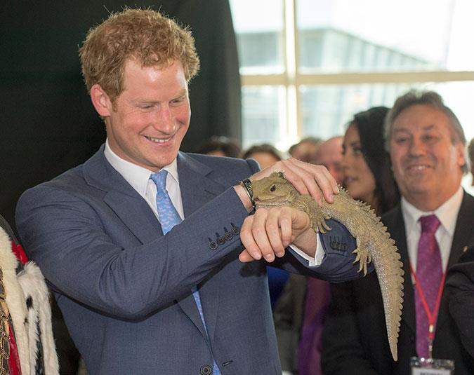 Prince Harry strokes his namesake; a 118-year-old tuatara named Henry.