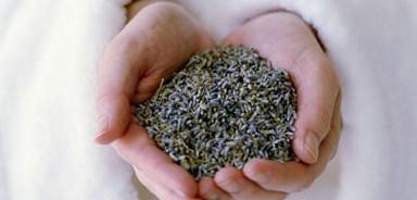 Sage advice: the healing power of herbs