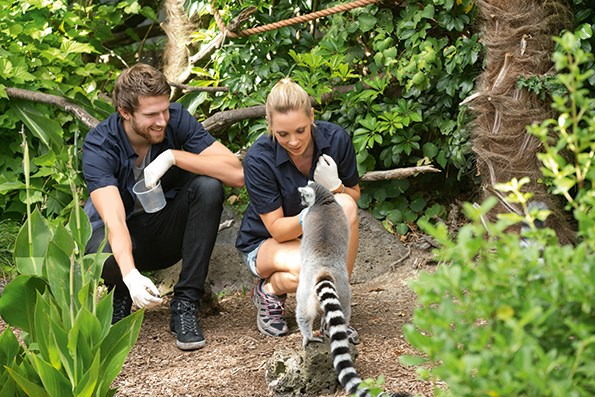 Sia and Jono meet the ring-tailed lemurs.