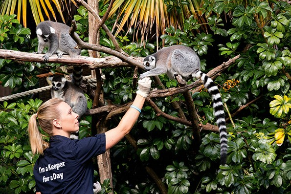 The lemurs reminded Sia of George, who plays Logan on the show.