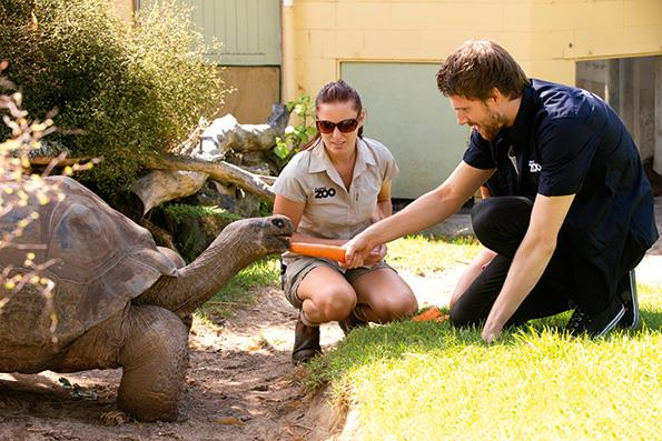Jono fed carrots to 45-year-old Smiley the tortoise, gave him a massage, and then took a selfie.