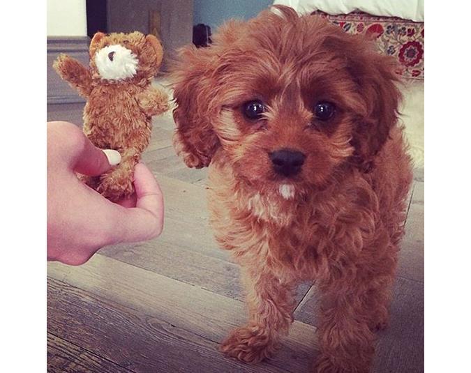 We love Katy Perry's dog Butters! Source: Instagram user katyperry.