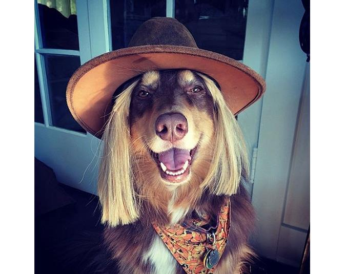 Actress Amanda Seyfried's dog Finn looks adorable in this stylish getup. Source: Instagram user mingey.
