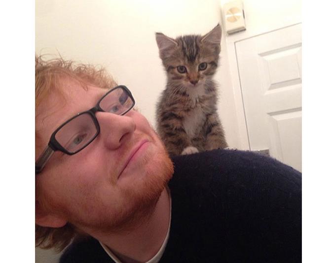We love musician Ed Sheeran's cat Graham! Source: Instagram user teddysphotos.