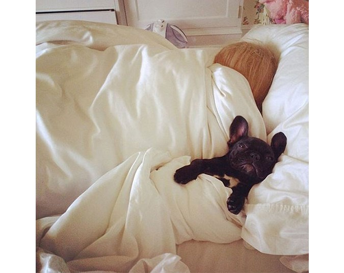 Lady Gaga's French bulldog Asia enjoys a sleep in. Source: Instagram user ladygaga.