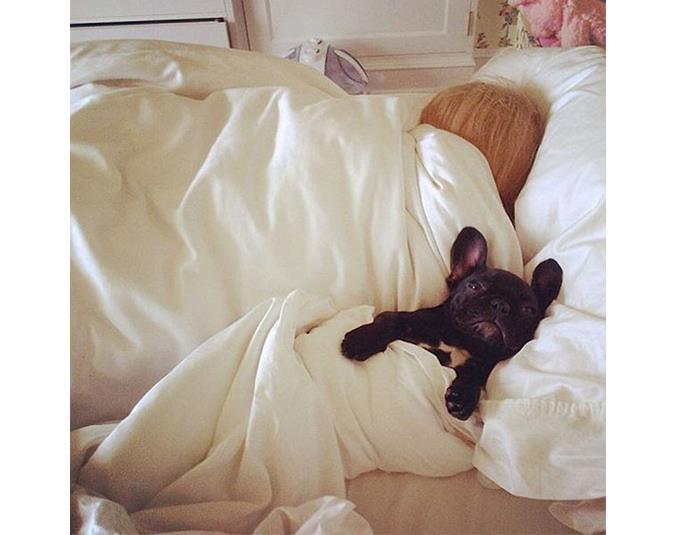 Lady Gaga's French bulldog Asia enjoys a sleep in. Source: Instagram user ladygaga.