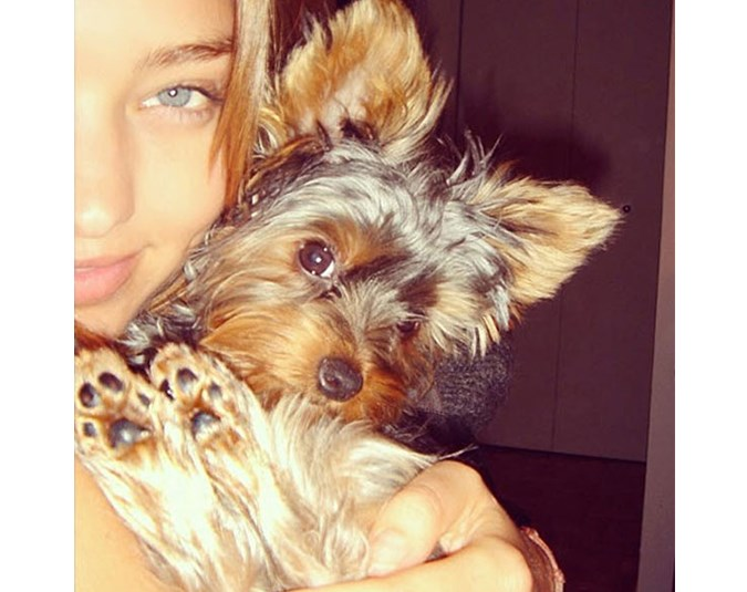 Model Miranda Kerr's Yorkshire Terrier, Frankie, is the luckiest dog in the world! Source: Instagram user mirandakerr.