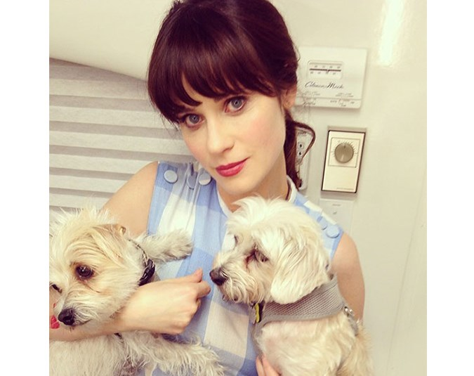 New Girl star Zoey Deschanel's Instagram is all about puppies. Source: Instagram user zooeydeschanel.