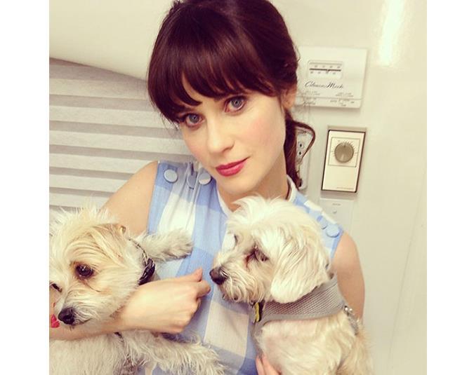 New Girl star Zoey Deschanel's Instagram is all about puppies. Source: Instagram user zooeydeschanel.