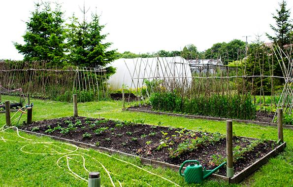 When planning your community garden, make sure the plot of land gets plenty of sun and has a water supply.
