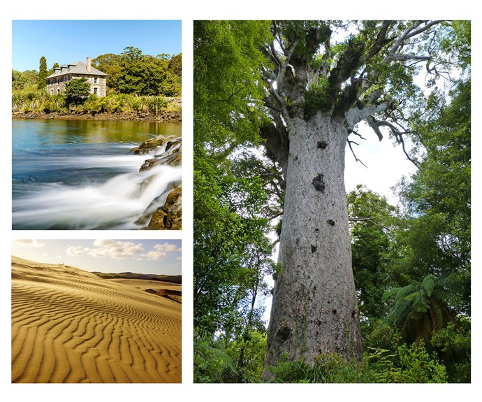 From top left: The Stone Store at Kerikeri. Tane Mahuta in the Waipoua Forest. Sand dunes at Te Paki Stream.