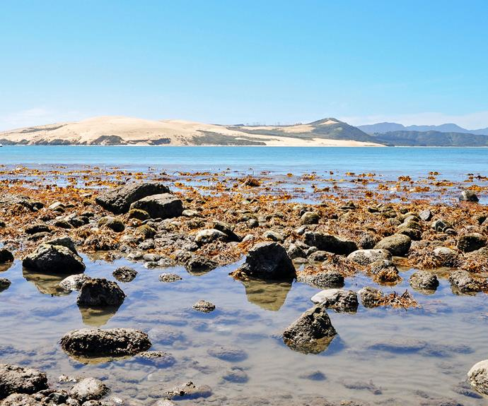 Looking across the mouth of Hokianga Harbour to the vast sand dunes that frame its northern shore.