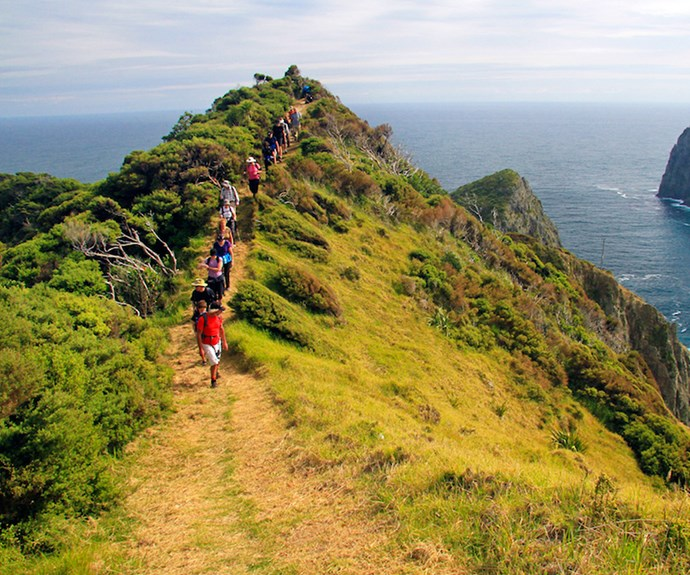 The annual Bay of Islands Walking Weekend caters to various levels of difficulty and offers breathtaking scenery and birdlife.