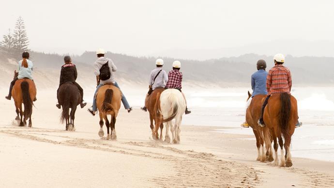 Horse trekking on Pakiri Beach, a 14km stretch of paradise in lower Northland.