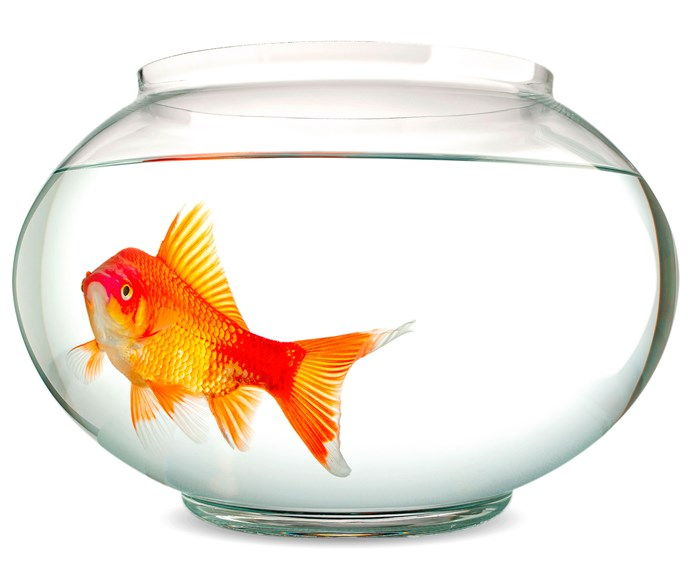 Like a fish in a fish bowl our generation is succumbing to loneliness.