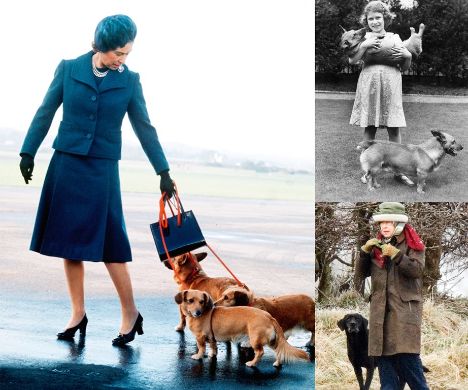 Left: The Queen and her Corgis. Above right: The then-Princess Elizabeth in 1936 with her mother's corgis. Bottom right: Shadowed by one of Sandringham's gun dogs in 2009.